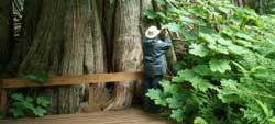 prince-George - Ancient Forest Trail