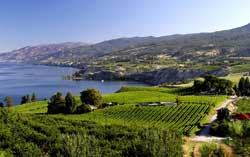 Wine Tour - Okanagan Valley
