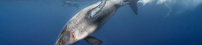 Le monde scientifique sous le choc après la découverte d'une nouvelle baleine à Tadoussac