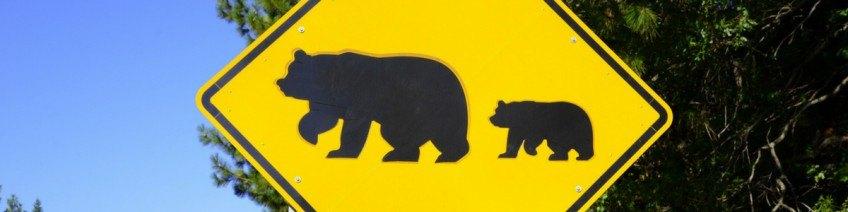 Quoi faire si vous rencontrez un ours ?