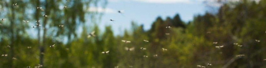 Comment se protéger des moustiques au Canada ?