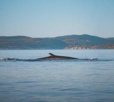 Où observer les baleines au Québec ?