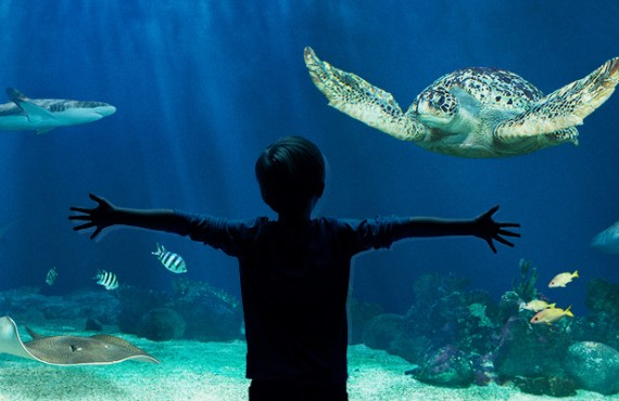 1-aquarium-vancouver