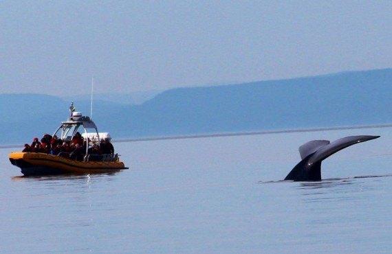 Croisère aux baleines en Zodiac