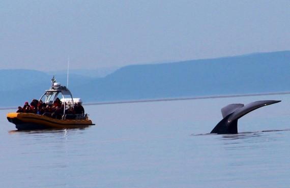 2-croisiere-baleines-zodiac-escoumins