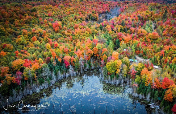 Vue aérienne sur la forêt laurentienne