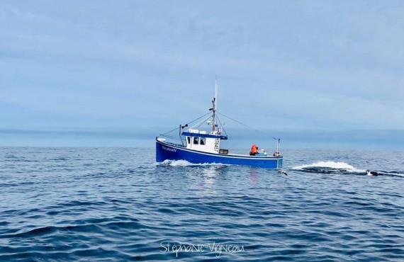 Excursion à bord d'un bateau de pêche