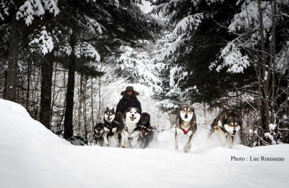 Excursion en traineau chiens