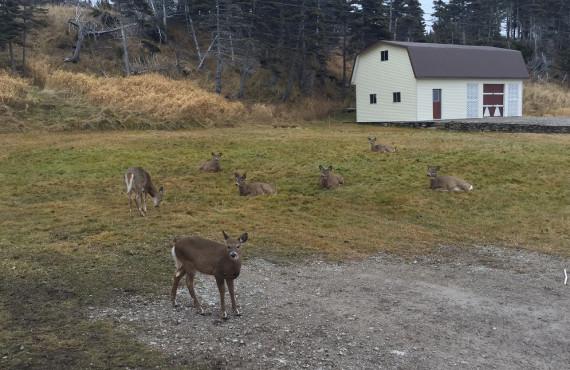 Gîte Cap Blanc, Anticosti, Quebec