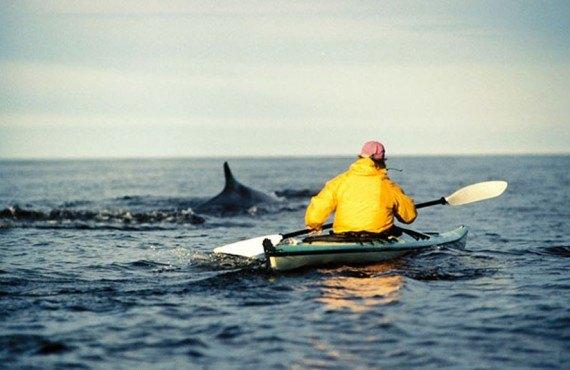 Kayak de mer avec les baleines grandes bergeronnes canada prix forfait - Kayak de mer 2 places ...