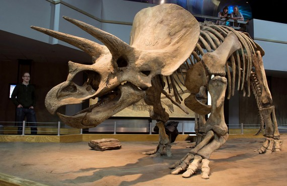 1-royal-tyrrell-museum
