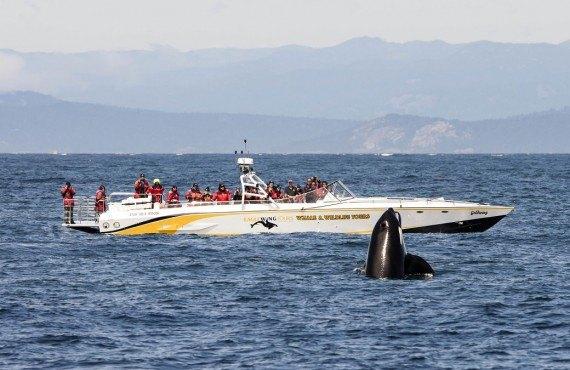 1-safari-bateau-victoria