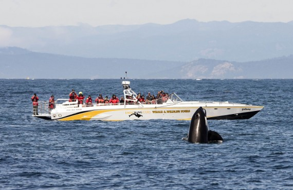 Safari aux orques en bateau