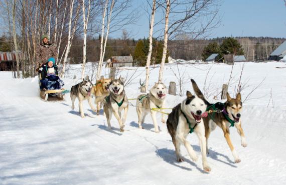 Randonnée en Traîneau à chiens au Baluchon