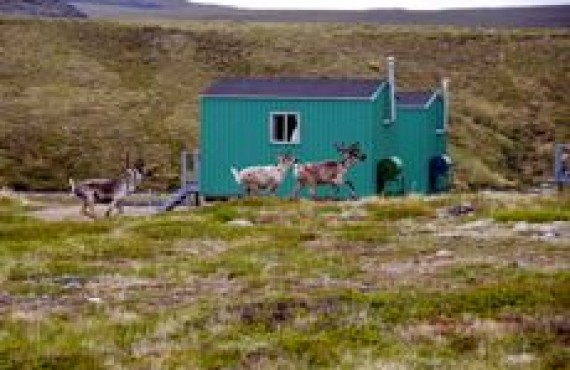 GRAND NORD - CARIBOUS - 1