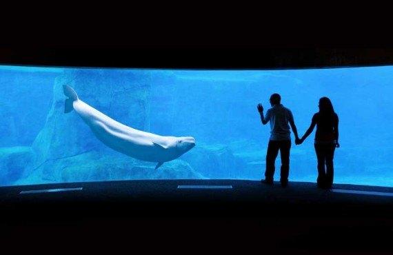 2-aquarium-vancouver.jpg