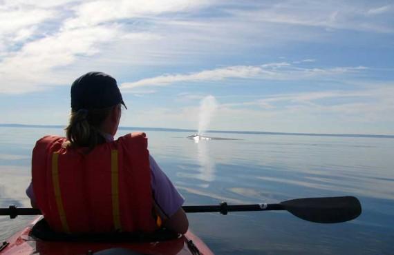 2-kayak-mer-baleine-bleue.jpg