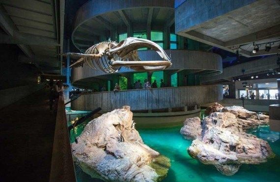 2-new-england-aquarium-boston.jpg