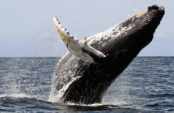2-observation-baleine-boston-safari.jpg