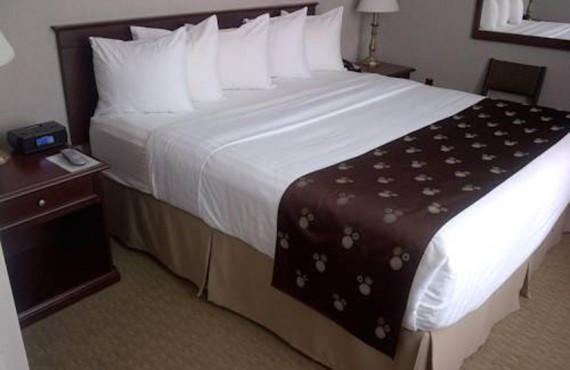 Quality Inn & Suites - Chambre lit King