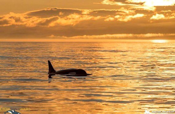 2-safari-aux-orques-victoria