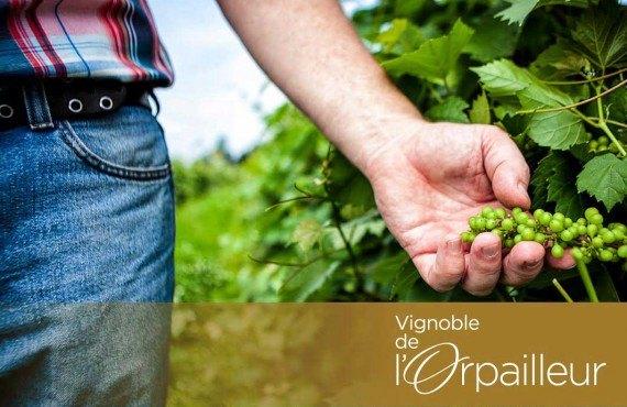 Vignoble de l'Orpailleur