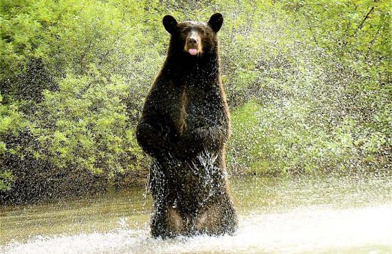 Safari à l'ours Wells Gray