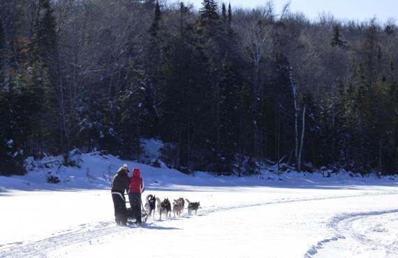 Traîneau à chiens sur le lac