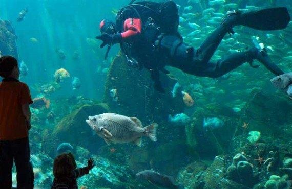 3-aquarium-vancouver.jpg
