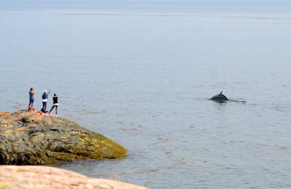 Observation des baleines - Camping Mer et Monde