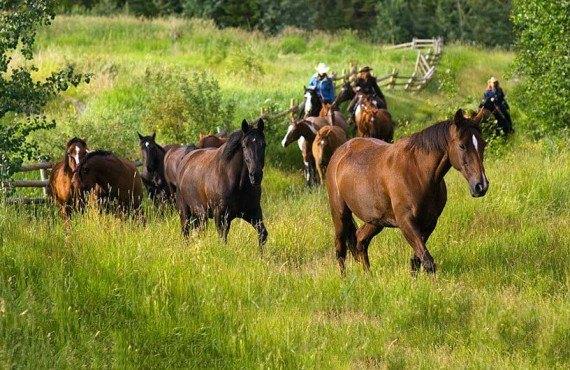 3-equitation-rocheuses-tyax.jpg
