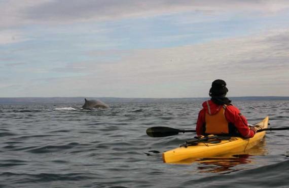 3-kayak-mer-baleine-tadoussac.jpg