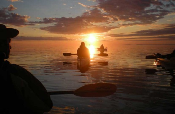 3-kayak-mer-baleine.jpg