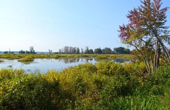 Marais dans le parc de Plaisance, Outaouais