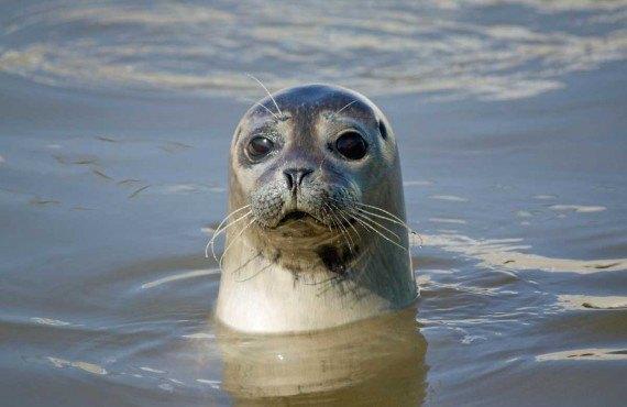Observation des phoques, Parc national du Bic