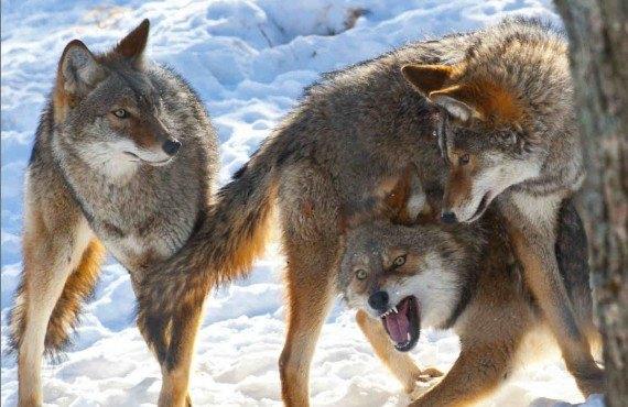 3-parc-animalier-omega-montebello.jpg