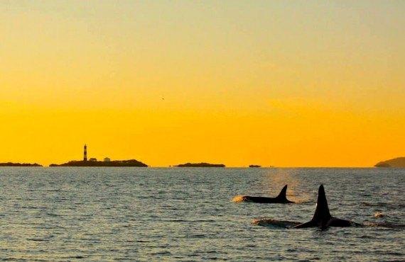3-safari-aux-orques-victoria