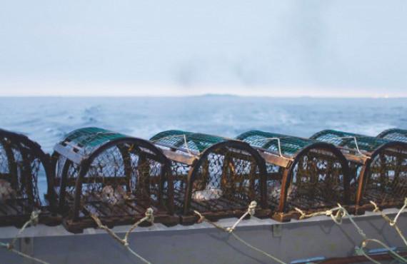 Les cages à homards