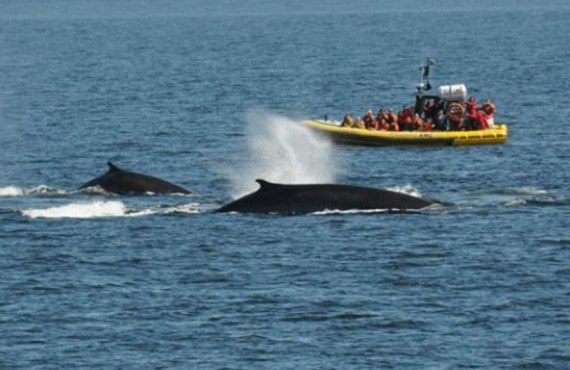 Safari aux baleines