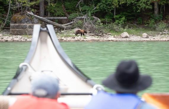 Balade d'observation à l'ours