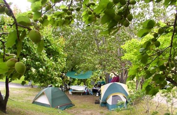 Camping Camp-Along - Emplacement pour tentes