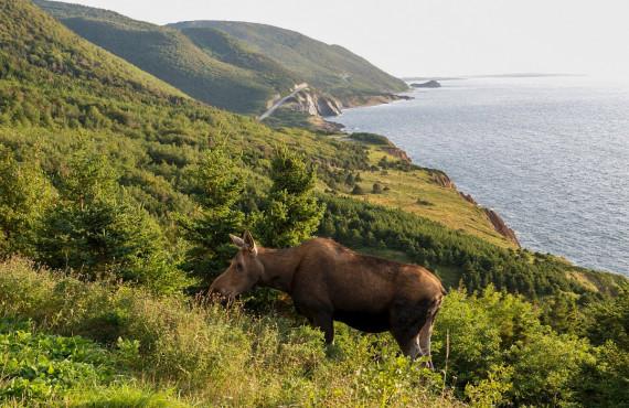 4-camping-cheticamp-cap-breton.jpg