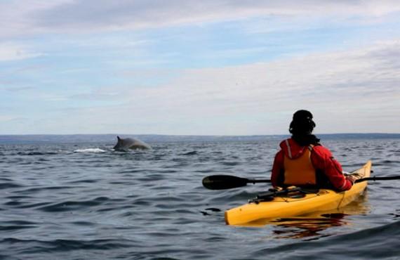 Kayak de mer avec les baleines