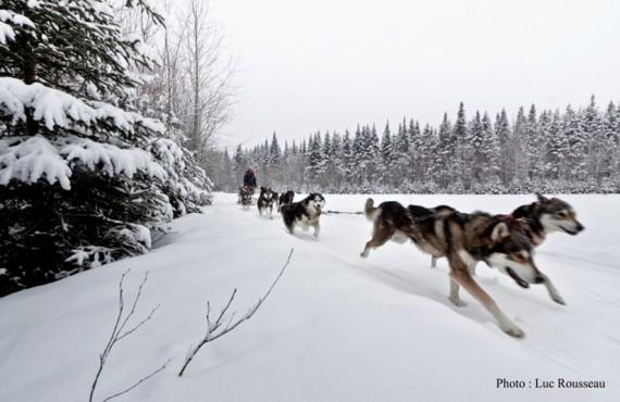 Excursion en traineau chiens