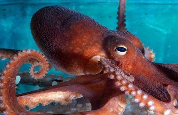 4-new-england-aquarium-boston-pieuvre.jpg