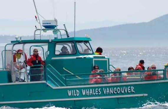 4-observation-orques-victoria-vancouver-bateau.jpg