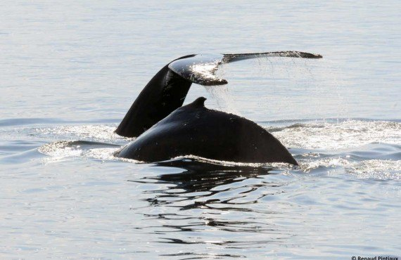 4-safari-baleine-bateau-tadoussac.jpg