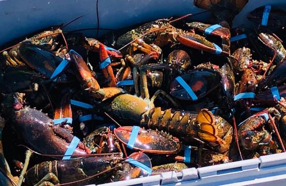Îles de la Madeleine lobsters