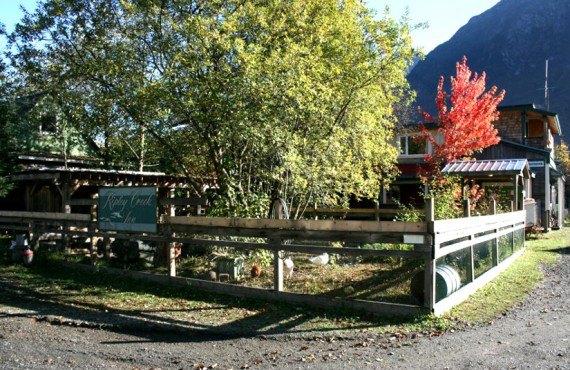 Auberge Ripley Creek - Le poulailler