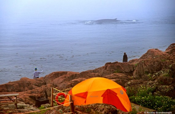 Camping Mer et Monde - Observation des baleines